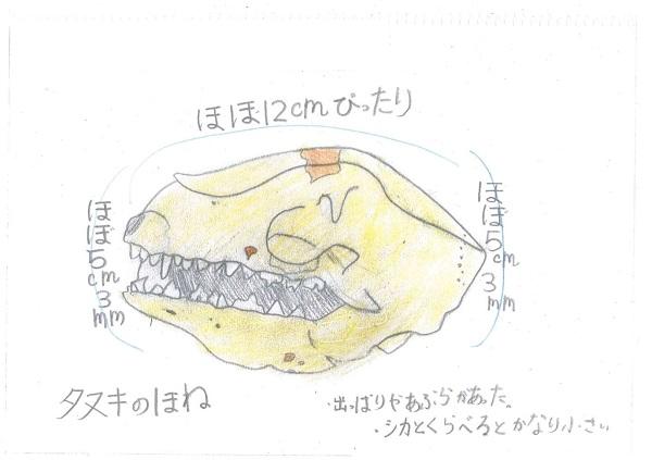 草薙(あかね3年)(726タヌキ)