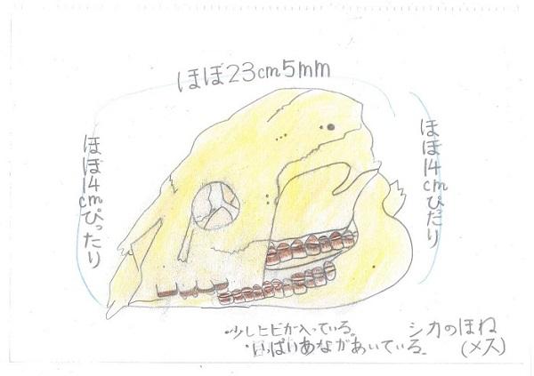 草薙(3年)(726シカ)