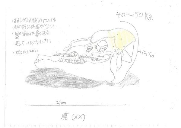 齊藤(726シカ)