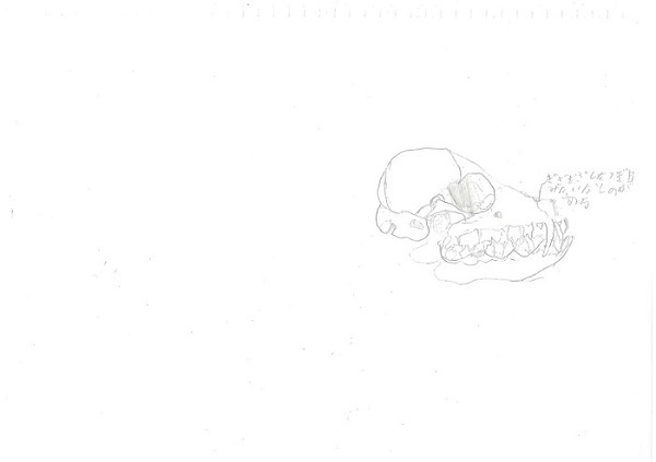 嘉藤(725タヌキ)