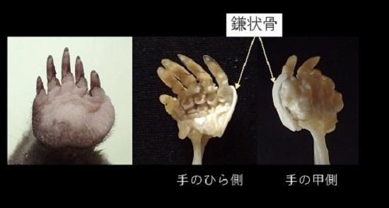 モグラの手