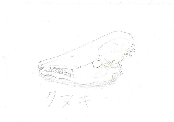 鈴木(726タヌキ)