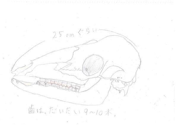 森田(726シカ)
