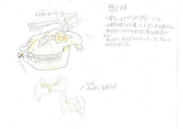 金子(725シカ)