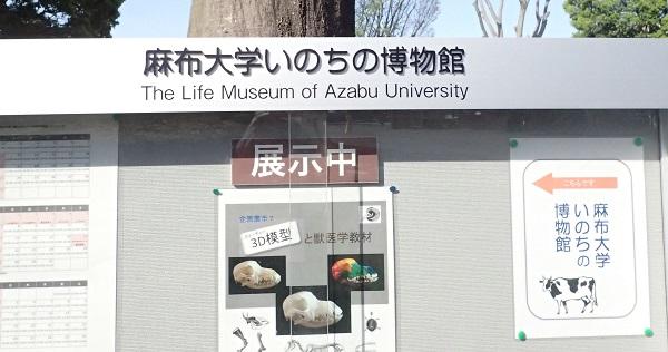いのちの博物館だより